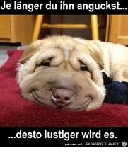Lustiges Hundegesicht