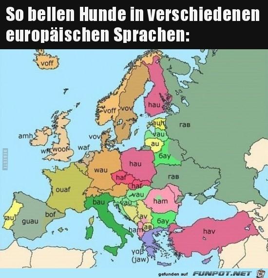Wie Hunde in Europa bellen